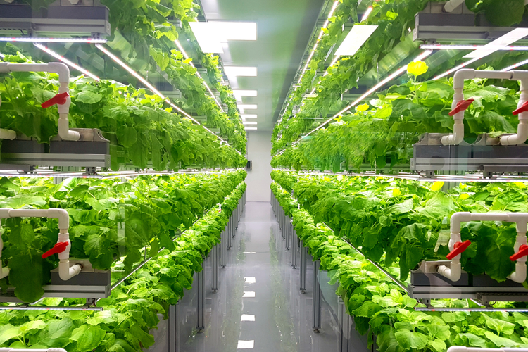 Growing Up: The Potential of Vertical Farming