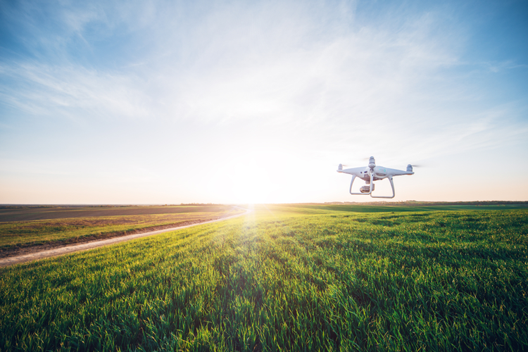 Agricultural drone flying over cornfield