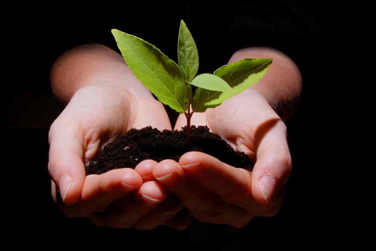 Hands holding dirt and plant, representing environmental growth