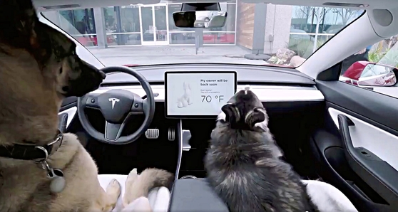 Two dogs in a Tesla while the new feature Dog Mode is on.