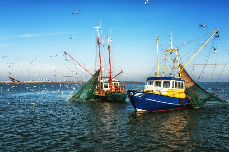 Once Controversial, Trawling Is Now Sustainable