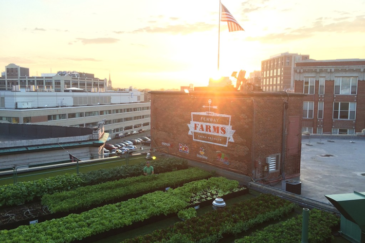 Image of Fenway Farms from Green City Growers