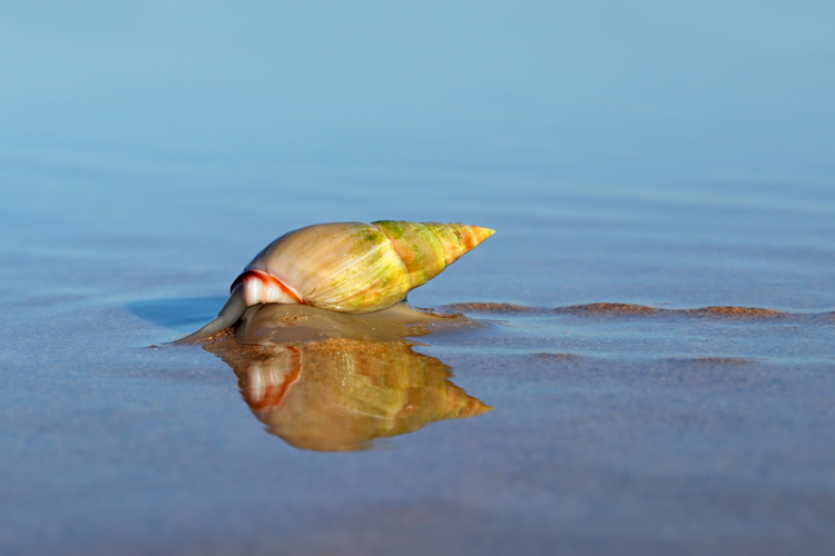 How Sea Snails Could Help Cure Cancer