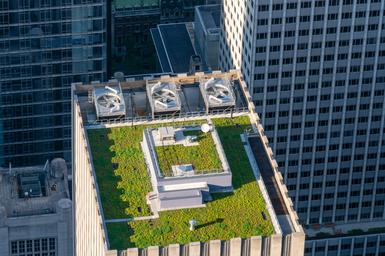 Green roof on top of a New York City building