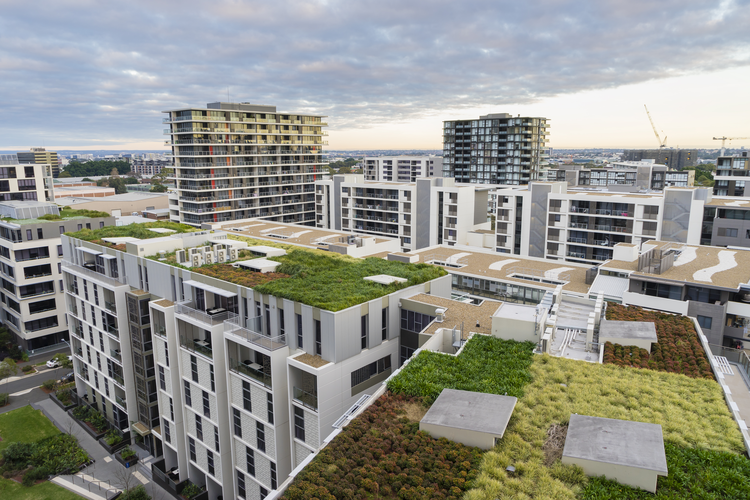 Why Green Roofing Can Be Key to Sustainability Efforts