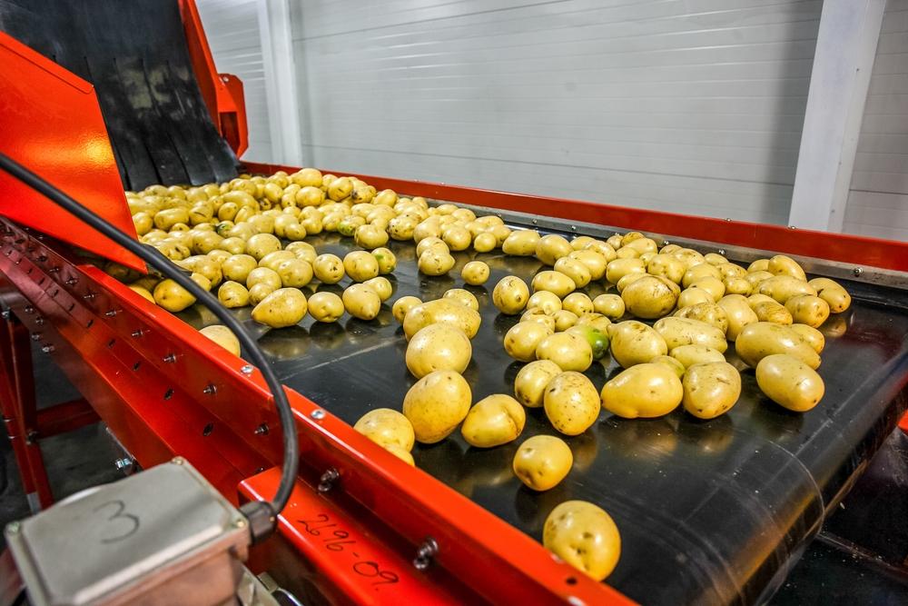 Một hệ thống băng tải trong một nhà máy chế biến khoai tây.