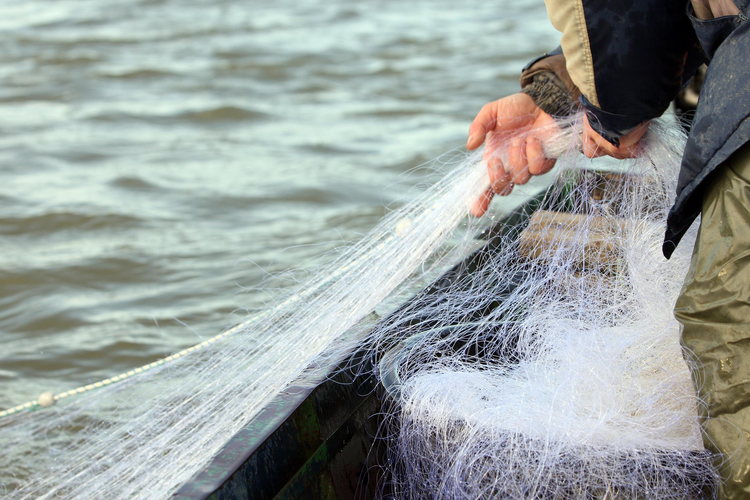 Fishermen Need to Take the Bait for Sustainable Fishing Practices