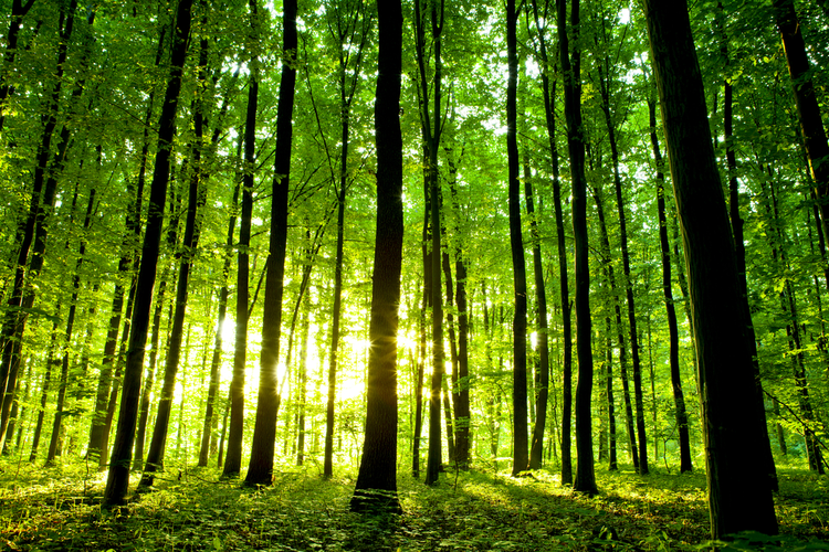 The Forest for the Trees: Understanding Sustainable Forestry