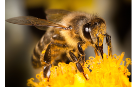 Bees Manufacturing More Than Honey