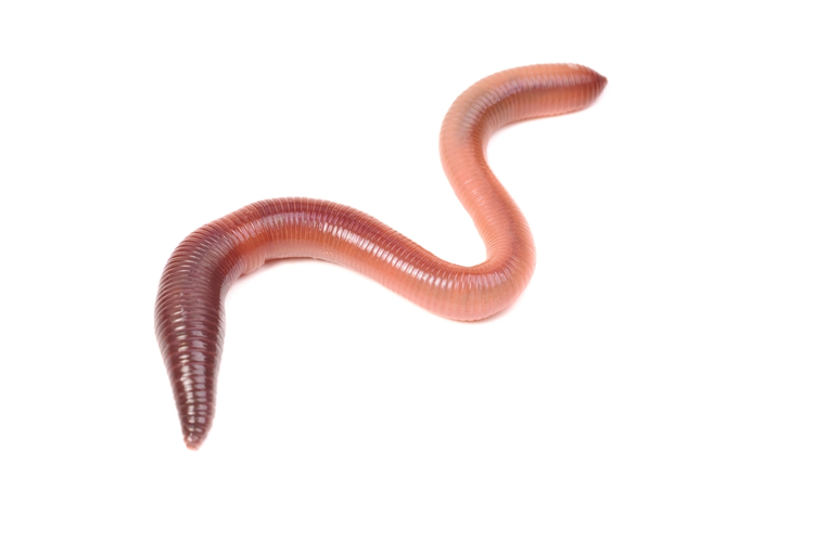 Worms Inspire Robotic 3D Printing Materials