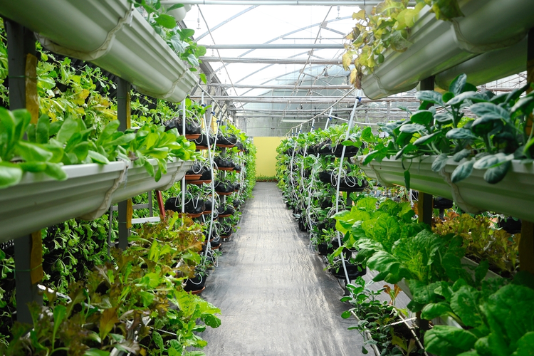 The Greening of the Food Supply Chain: Vertical Farming