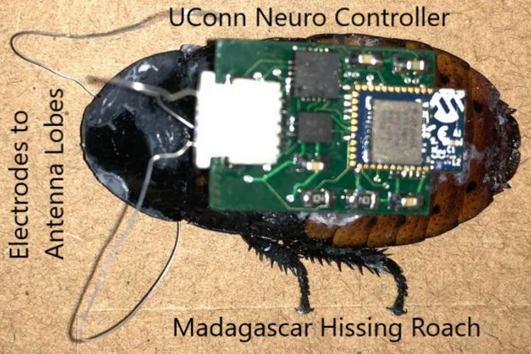 The Cyborg Cockroach That Could Save Lives