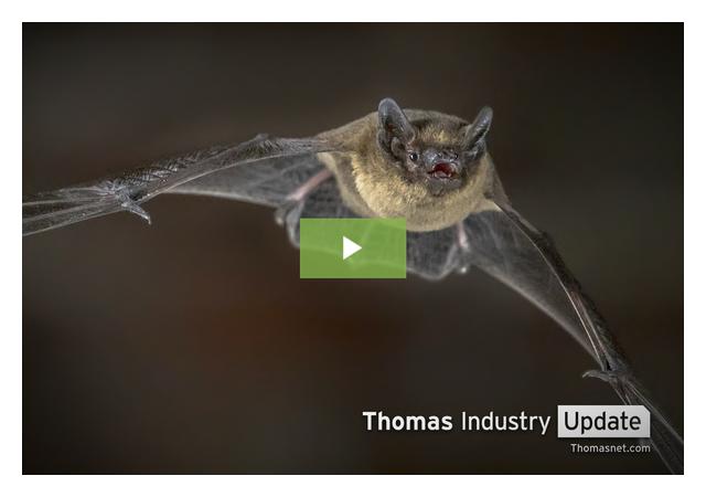 How Bats Could Revolutionize Autonomous Technology